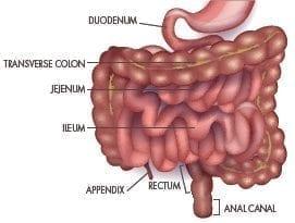 ulcers-anatomy-1