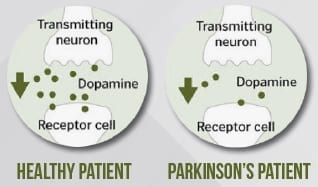 parkinsons-receptors
